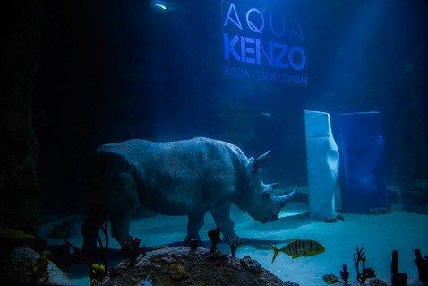 Где увидеть первого и единственного носорога Aqua Kenzo под водой?