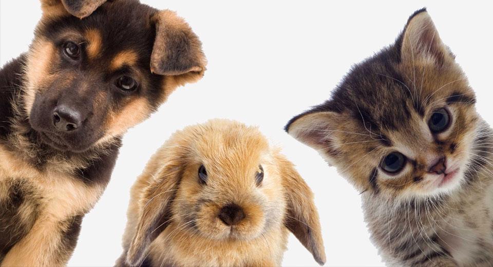 Стоит ли отказываться от животного если в доме появился ребенок